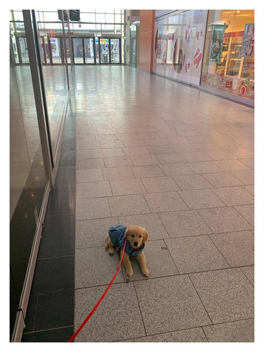 Welpen im Einkaufszentrum