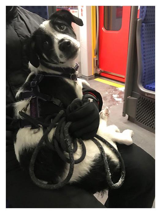 Welpe in S-Bahn
