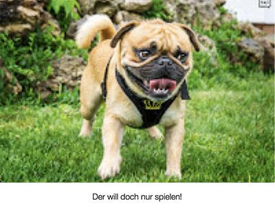 Kynophobie - Angst vor Hunden