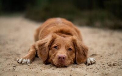 Für einen gesunden besten Freund: So stärkt ihr das Immunsystem eures Hundes