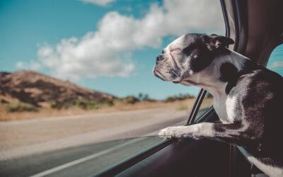 Autoreise mit Hund: 5 nützliche Tipps – von Jesse Reimann