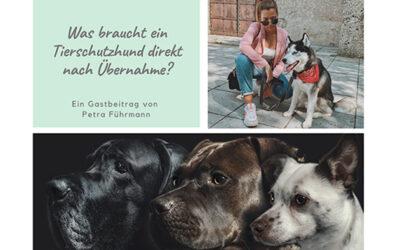 Was braucht ein Tierschutzhund direkt nach Übernahme? – von Petra Führmann