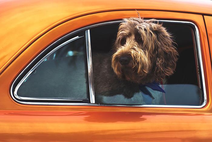5 Tipps für eine Autoreise mit Hund