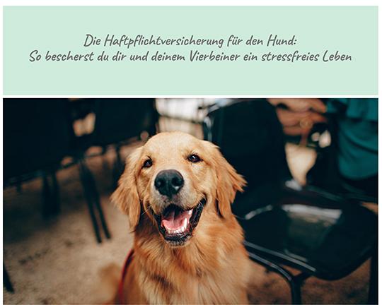 Die Haftpflichtversicherung für den Hund