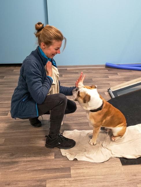 Welpe Förde Hundephysiotherapie