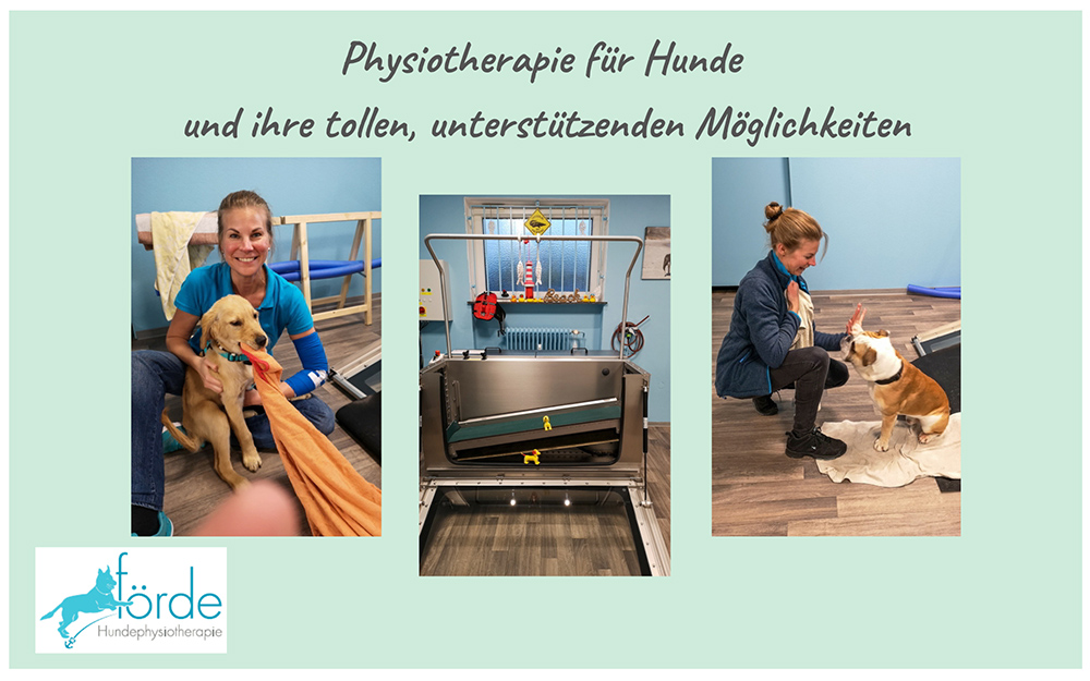 Was ist Hundephysiotherapie?