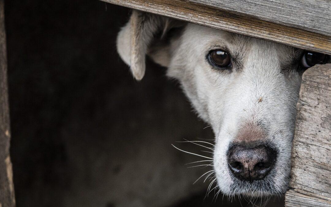 Dein Hund ist weggelaufen? – Das solltest Du jetzt tun!