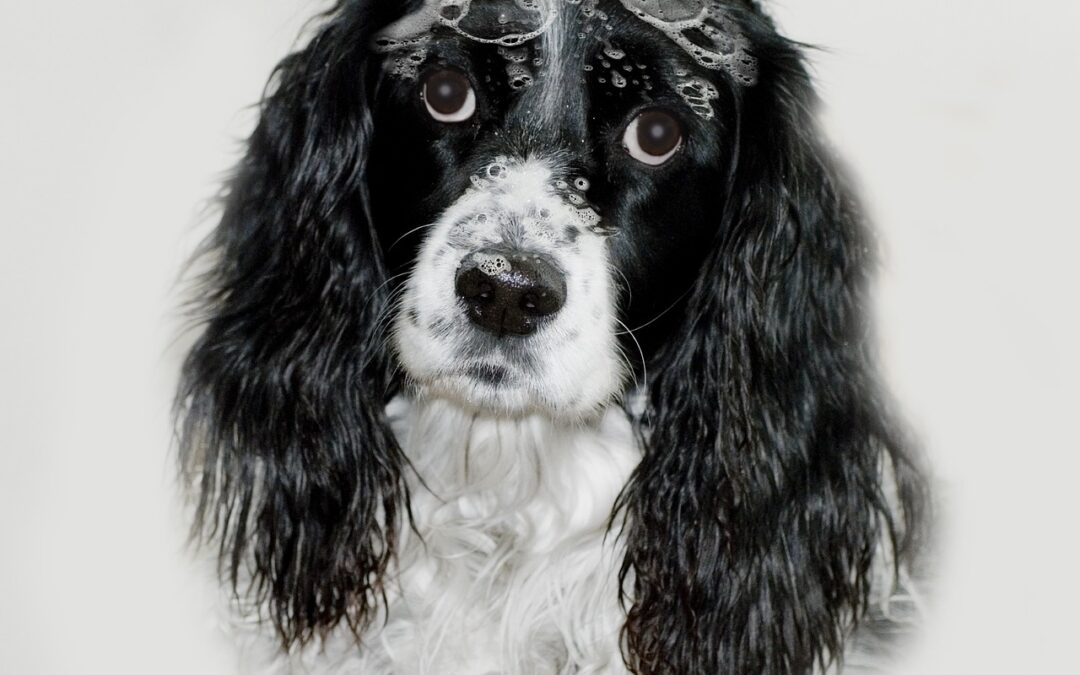 Hundeshampoo selber machen – 3 einfache Rezepte