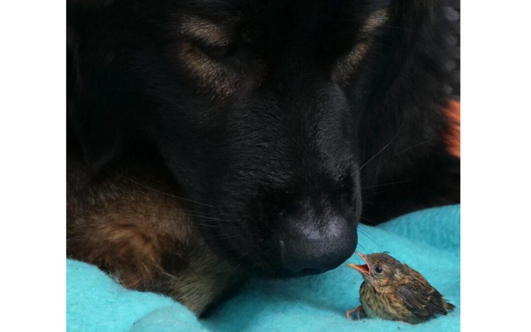 EROS hat nen Vogel